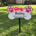 doggie-bone-bailey